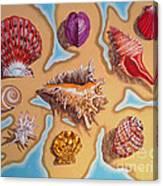 Beach Shells Canvas Print