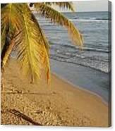 Beach Under Golden Palm Canvas Print