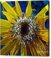 Beaded Flower Canvas Print