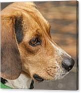 Beagle Loyalty Canvas Print
