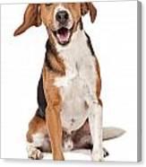 Beagle Mix Dog Isolated On White Canvas Print