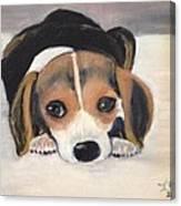 Beagle Resting Canvas Print