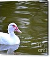 Beak And Feather Reflections Of The Muscovy  Canvas Print