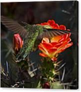 Beak Deep In Nectar  Canvas Print