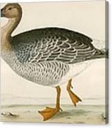 Bean Goose Canvas Print