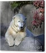 Bear 3789 Canvas Print