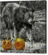 Bear And Pumpkins Canvas Print