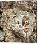 Bear Cave Canvas Print