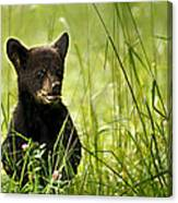 Bear Cub In Clover Canvas Print