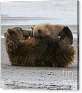 Bear Cubs Nurse Canvas Print