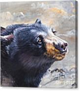 Four Winds Bear Canvas Print
