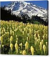 Bear Grass At Mt. Rainier - V Canvas Print