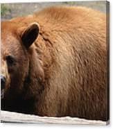 Bear In The Bath Canvas Print