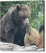 Bear Kisses Canvas Print