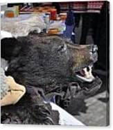 Bear Skins For Sale Canvas Print