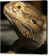 Bearded Dragon Profile Canvas Print