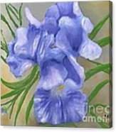 Bearded Iris Blue Iris Floral  Canvas Print