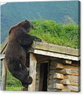 Bearly Able Canvas Print