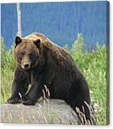 Bearly Posing Canvas Print