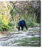 Bearly Stroll Canvas Print