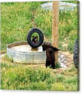 Bears At Play Canvas Print
