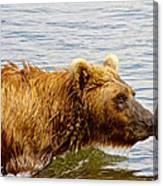 Bear's Eye View Of Swimming Grizzly In Moraine River In Katmai Canvas Print