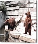 Bears Feeding Time At The Zoo II Canvas Print