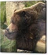 Bears In Ohio. No.23 Canvas Print