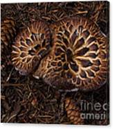 Beartooth Mountain Mushrooms   #9142 Canvas Print
