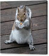 Beast Mode Squirrel Canvas Print