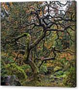 Beautiful And Bare Japanese Lace-leaf Maple Tree Canvas Print