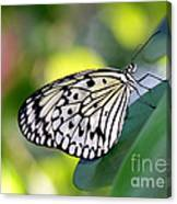 Beautiful Black N White Rice Paper Butterfly Canvas Print