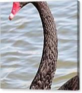 Beautiful Black Swan Canvas Print