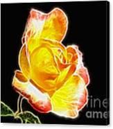 Beautiful Blooming Yellow Rose Canvas Print