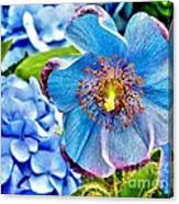 Beautiful Blue Orchid Canvas Print