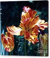 Gorgeous Tulip Canvas Print