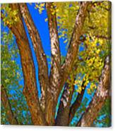 Beautiful Blue Sky Autumn Day Canvas Print