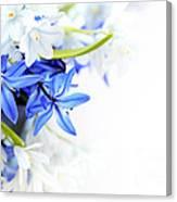 Beautiful Blue White Flower Canvas Print