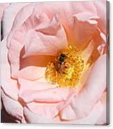 Beautiful By Nature Canvas Print