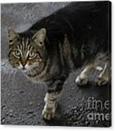 Beautiful Cat Canvas Print