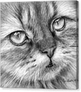 Beautiful Cat Canvas Print