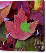 Beautiful Colors Of Fall Canvas Print