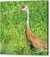 Beautiful Crane Canvas Print
