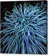 Beautiful Fireworks 13 Canvas Print