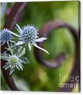 Beautiful Flower Buds Canvas Print