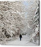 Beautiful Forest In Winter With Snow Covered Trees Canvas Print