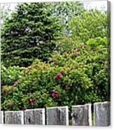 Beautiful Front Yard - Roses - Trees Canvas Print