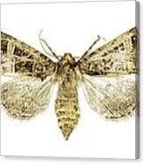 Beautiful Gothic Moth Canvas Print