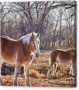 Beautiful Horses Canvas Print