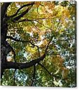 Beautiful Leaf Blanket Canvas Print